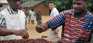 Two men inspect cocoa beans