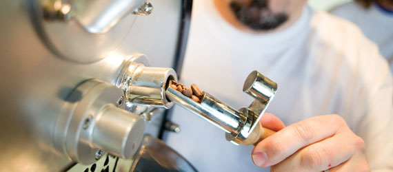 Coffee roaster examines beans during roasting process